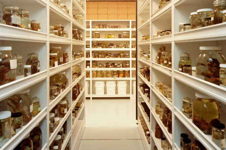 Education shelving systems