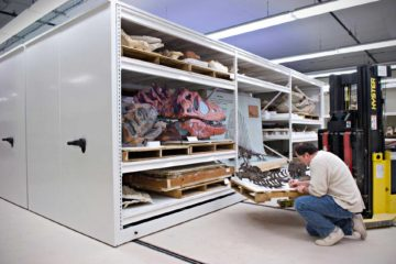heavy duty museum storage of fossils